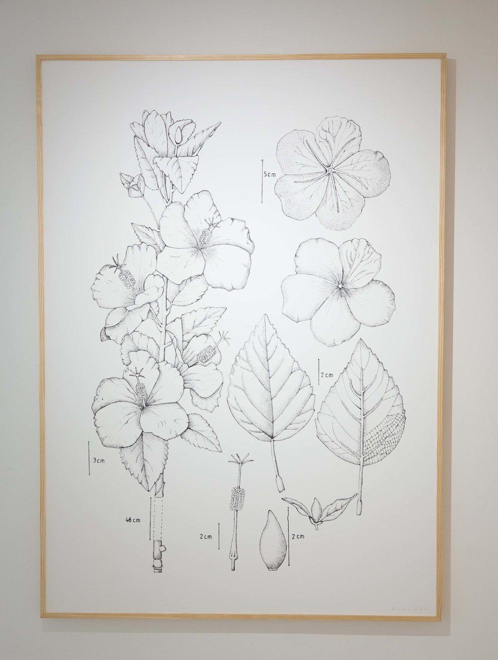 PIT#1 Hibiscus Rosa Sinensis (Bunga Raya)