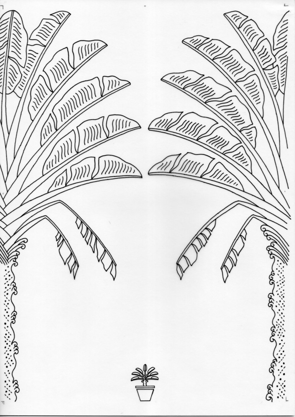 Pygmy Traveller's Palm – Inked Drawings