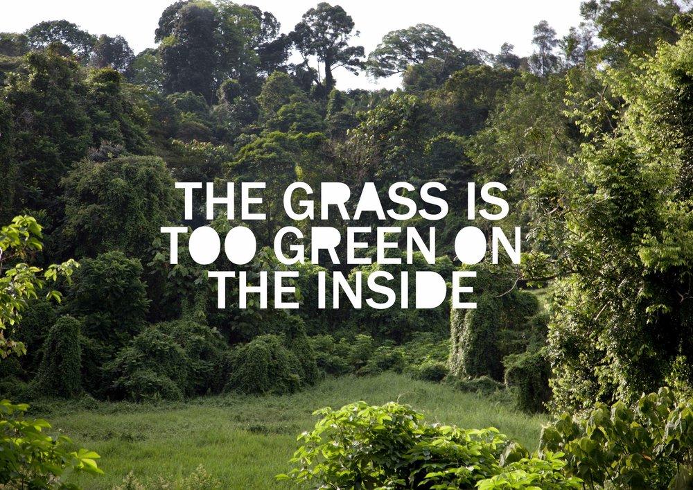 05 DawnNG_grass.jpg