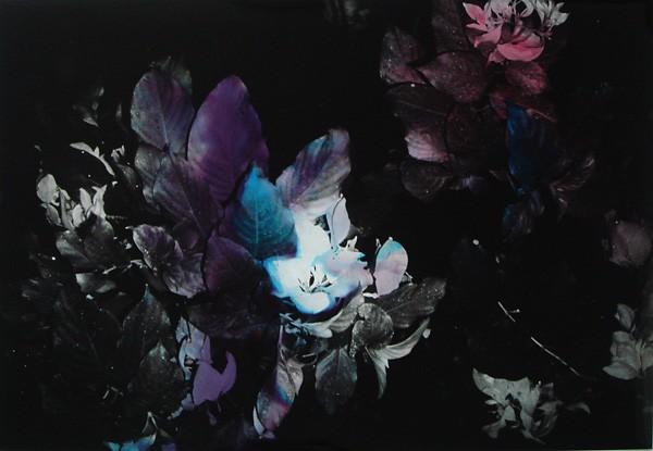 Black Varieties #2
