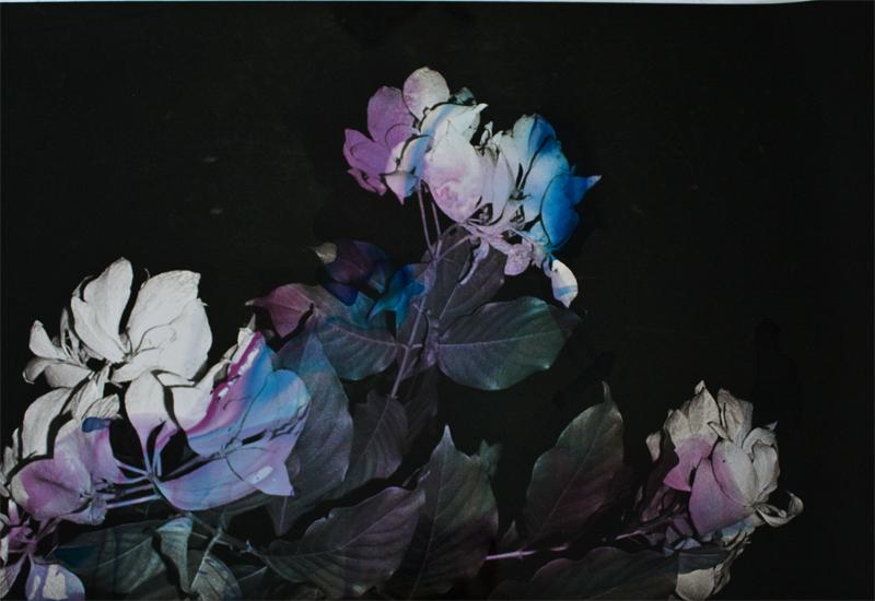 Black Varieties #3