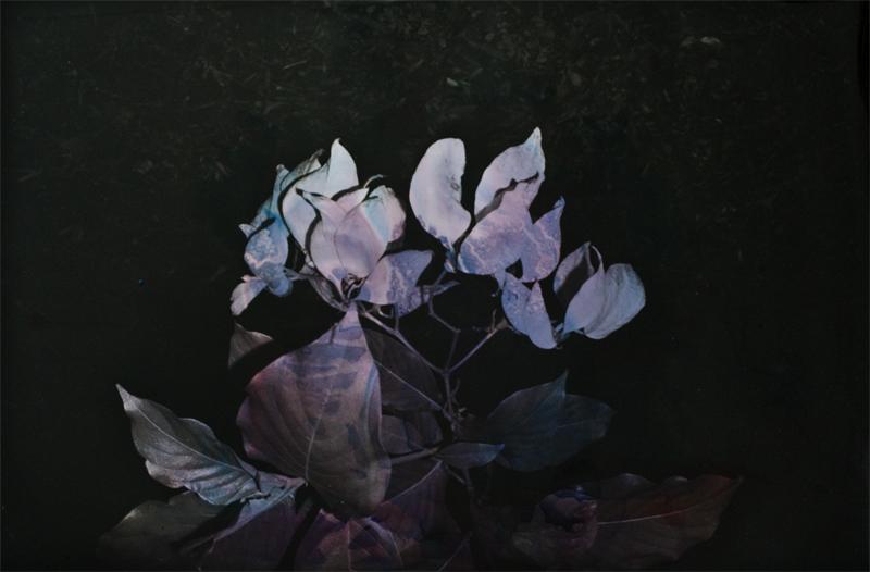 Black Varieties #5