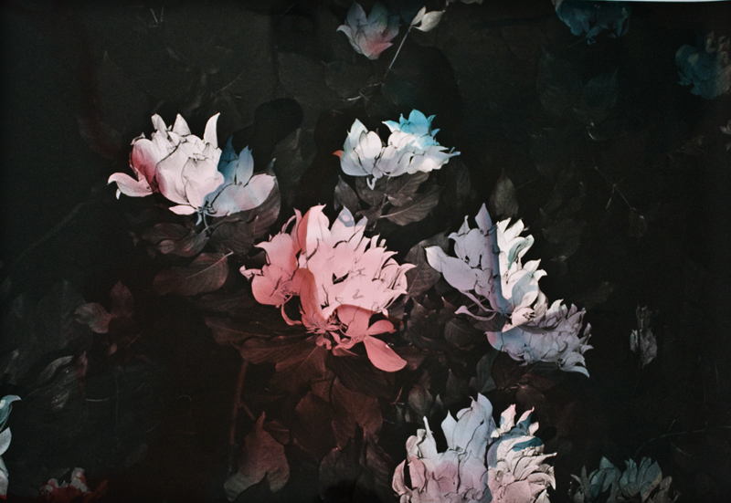 Black Varieties #6