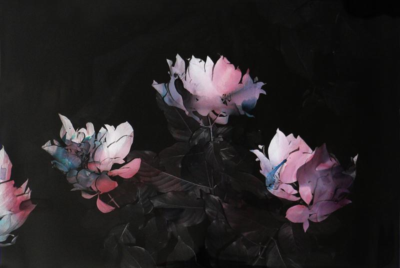 Black Varieties #8