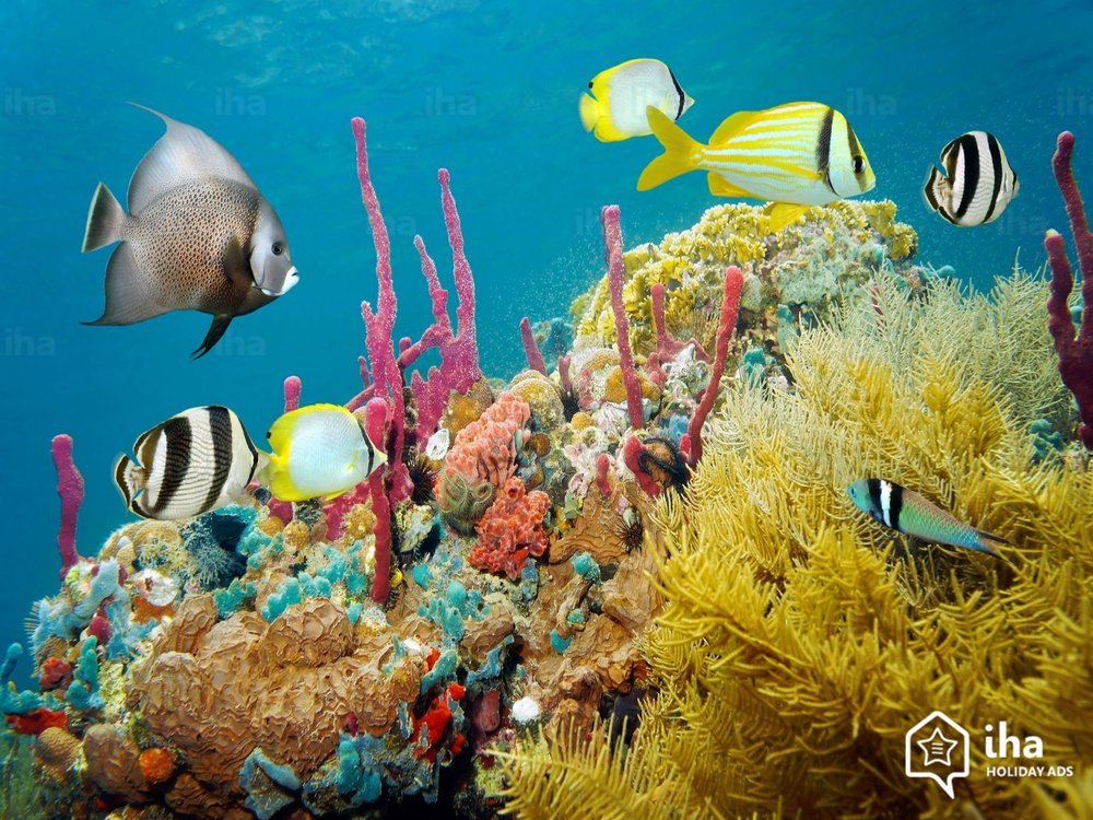 Negril-Colored-underwater-marine-life-in-a-coral-reef-in-jamaica.jpeg