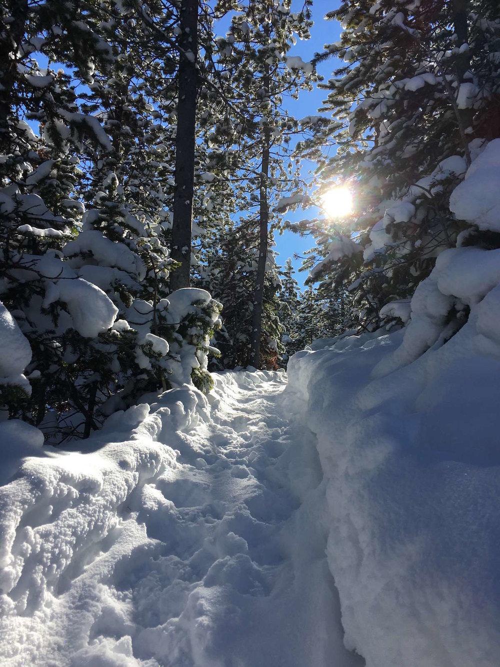 Moose Tracks Trail