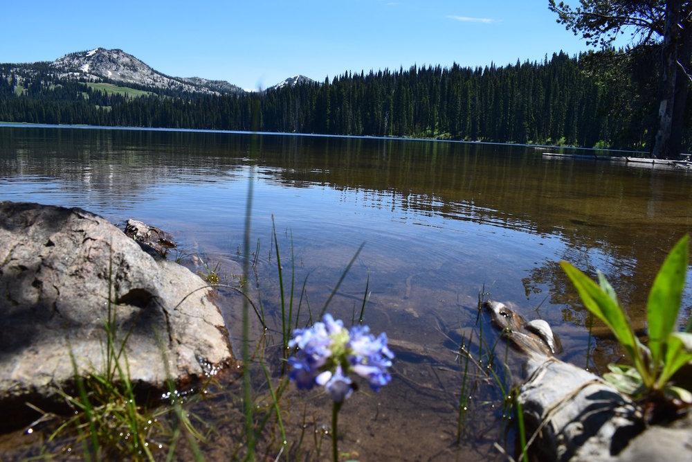 boulder lake flower.JPG