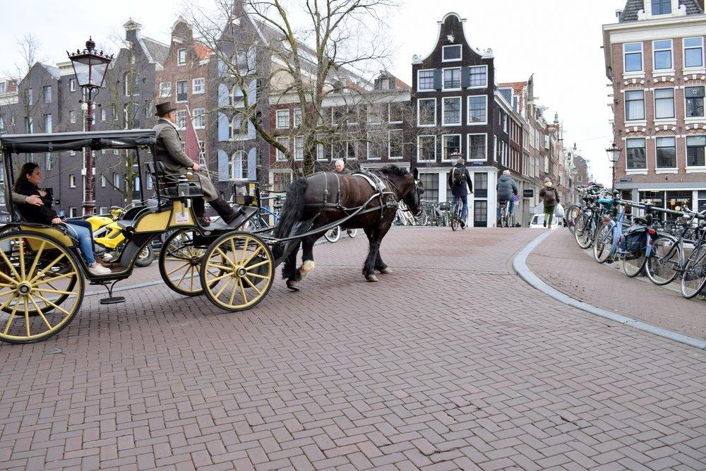 horse-carriage-amsterdam.JPG