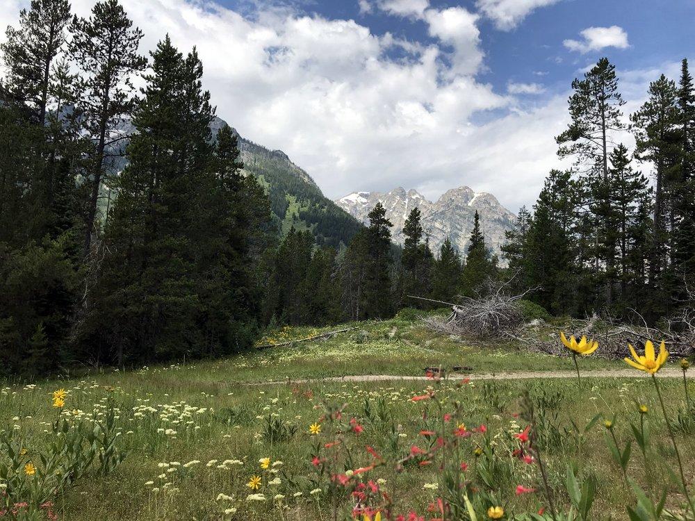 Nearby Wildflowers
