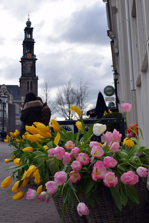 tulip-museum.jpg