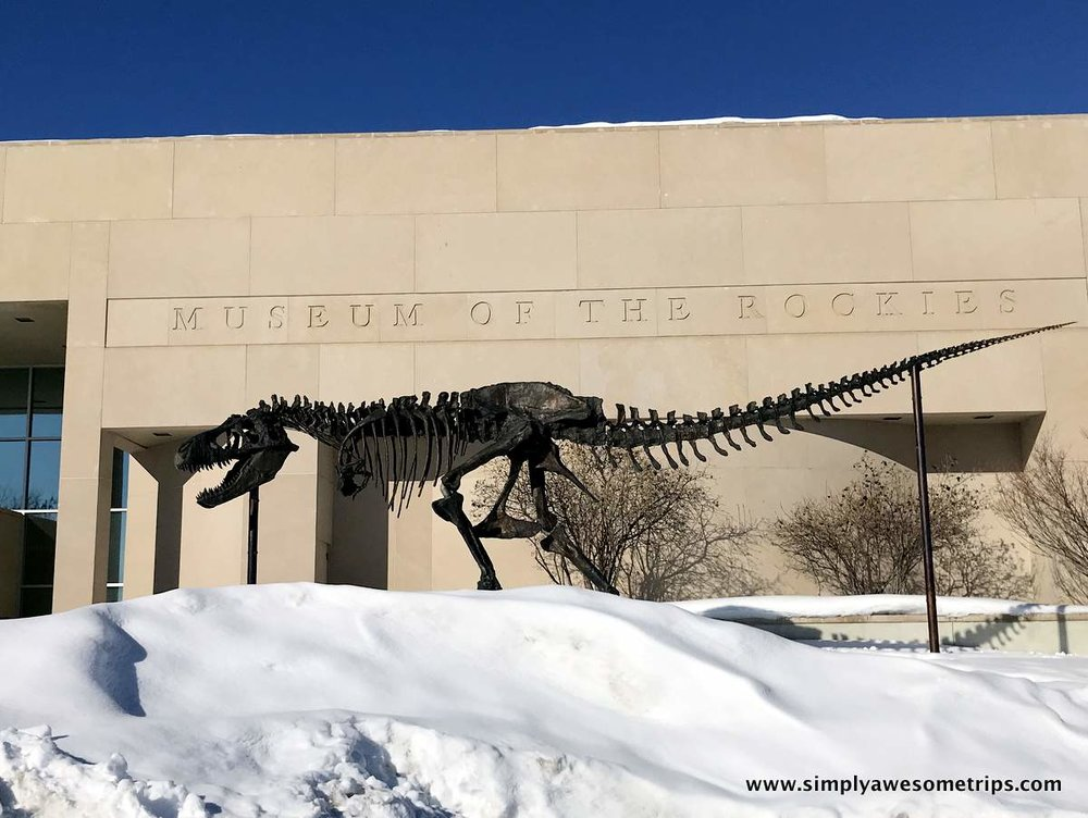 museum-of-the-rockies.JPG