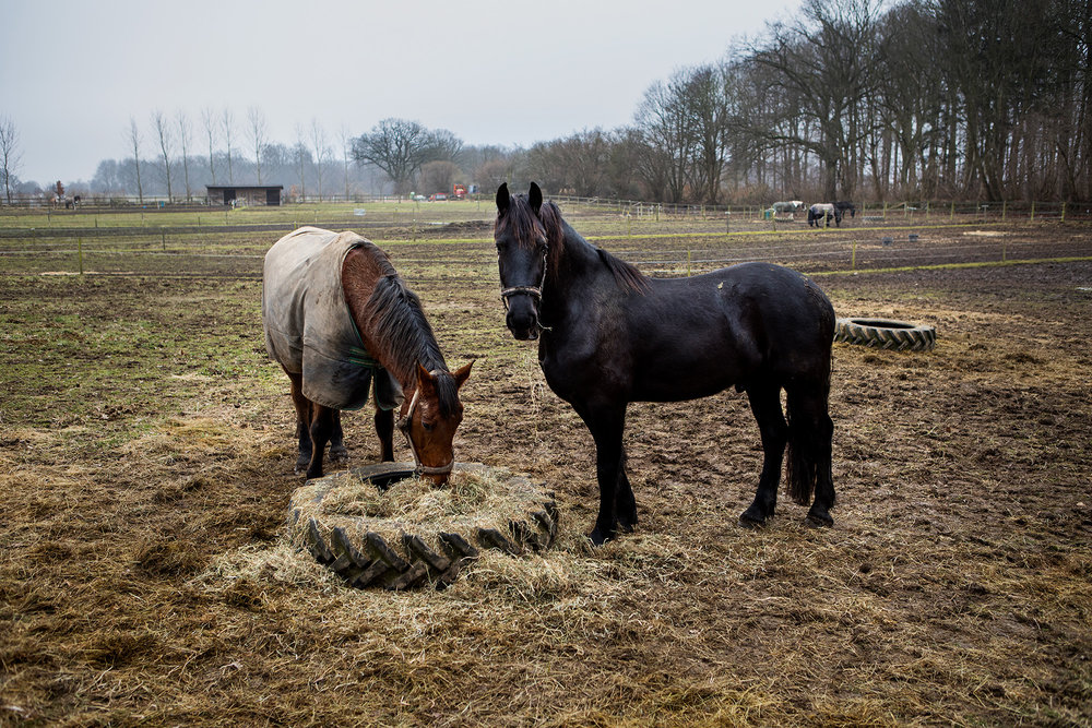 Horse Feed.Birkerød, Denmark. 2017
