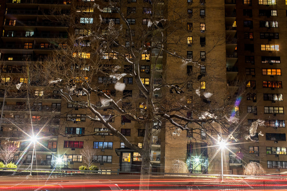 Plastic bags caught in a tree outside of the Ebbets Field Apartment complex. Fieldbridge Associates, owner of the Ebbets Field housing complex, filed more than 1,800 eviction cases against tenants from 2014 through 2016.
