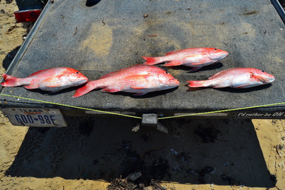Limit of red snapper