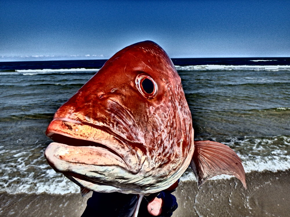 Nearshore Red Snapper