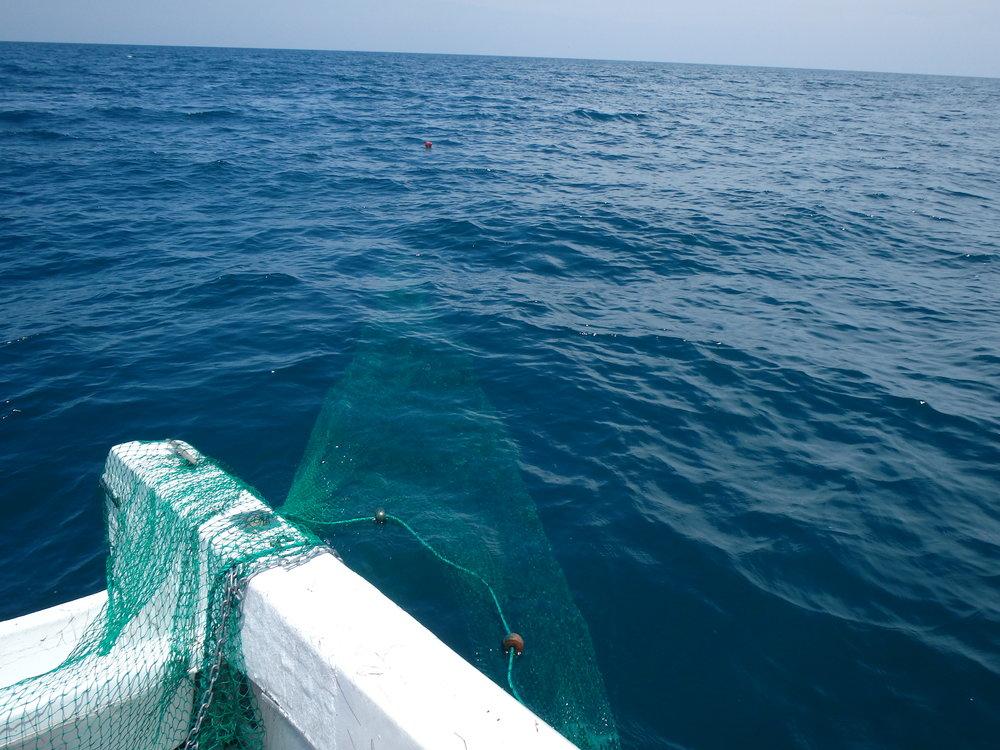 Offshore shrimping