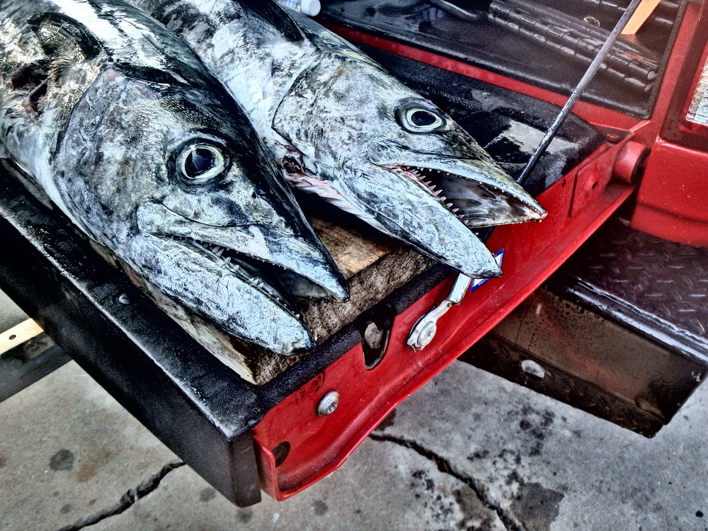 Limit of King Mackerel