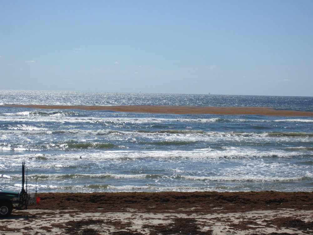The 20 mile marker typically aggregates heavy seaweed deposits by late May.