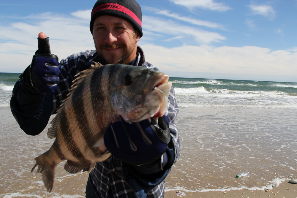 February Sheepshead