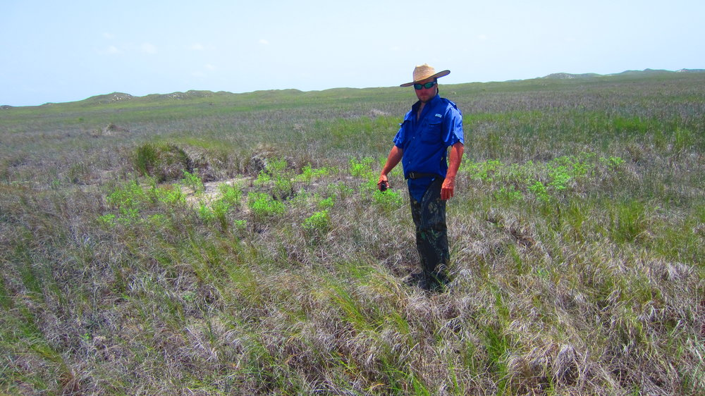Karankawa site visit-Several miles behind the dunes