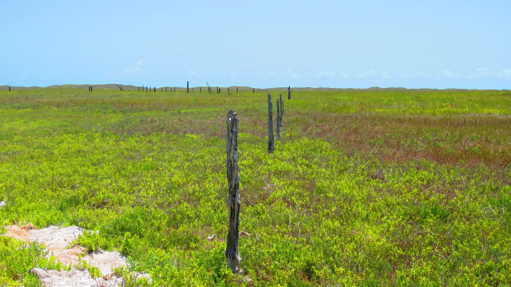 Remains of Dunn Ranch pens at Green Hill Line Camp