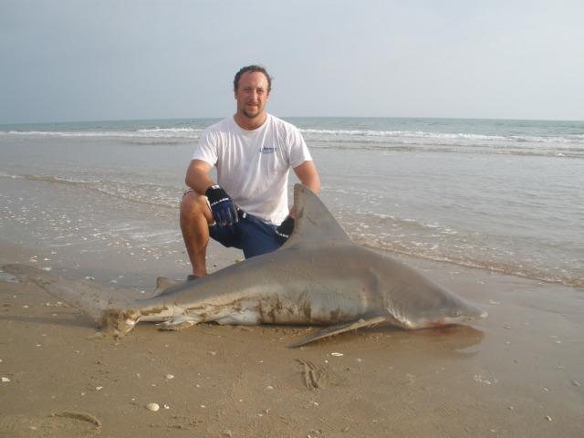 Wintertime sandbar shark