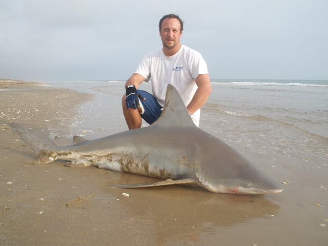 2010 winter Sandbar Shark