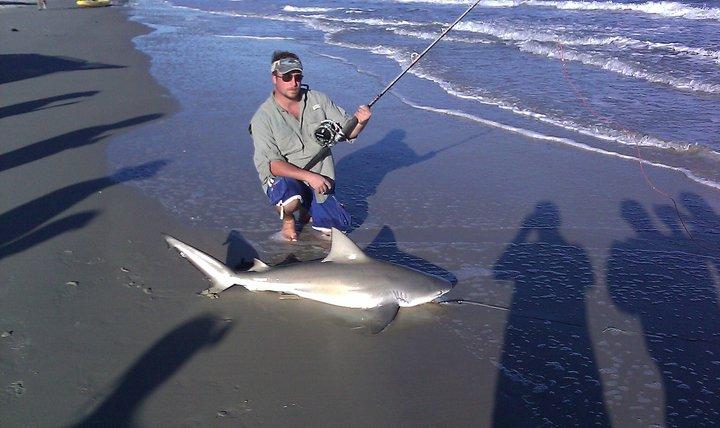 Fall Bull Shark