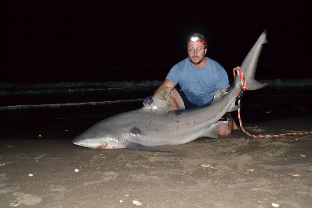 Bombing Range Duck, Spanish Mackerel, 7'1'' Bull Shark. - Padre Island National Seashore