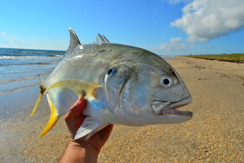Jackfish, Redfish, RV trip, Trout, Spanish Mackerel, Southern Stingrays, Overnight sharking trips. - Padre Island National Seashore