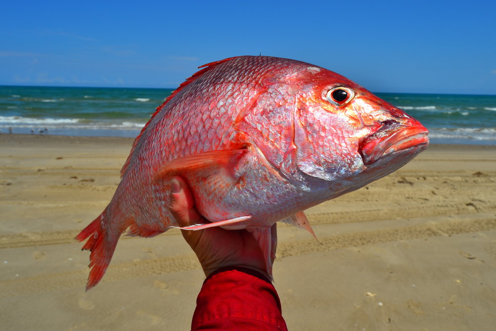 WWII Coast Watch Guns in Port Aransas, Limit of Red Snapper on lures, Tropical storm-almost stranded down Island, Sharking. - Padre Island National Seashore