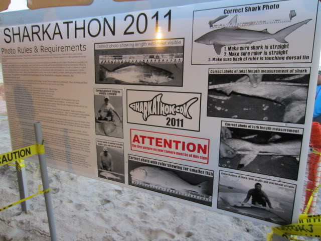 Sharkathon 2011 - Padre Island National Seashore