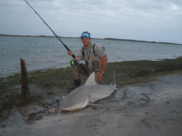 Blacktip Shark beach invasion on casted baits. Shark fishing Mansfield Channel. - Padre Island National Seashore