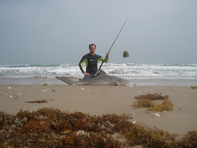 Bull Sharks, redfish, whiting, Black Drum including oversize drum. Southern Ray. - Padre Island National Seashore