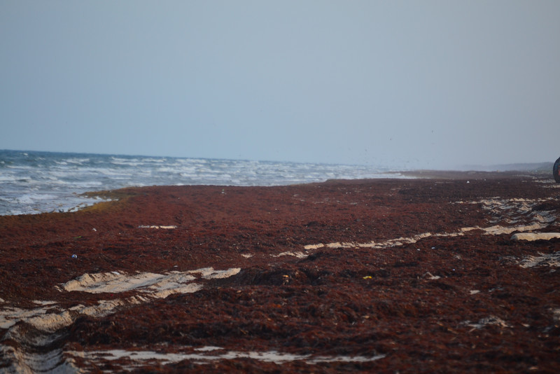A heavy seaweed layer