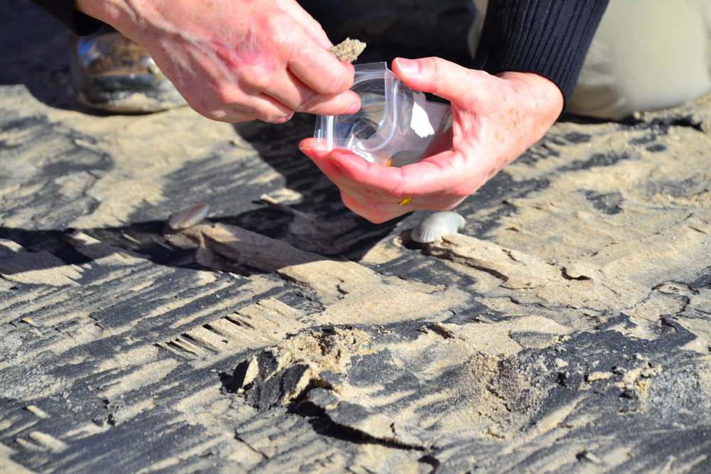 Collecting Hirolurite sand as a souvenir of their trip!