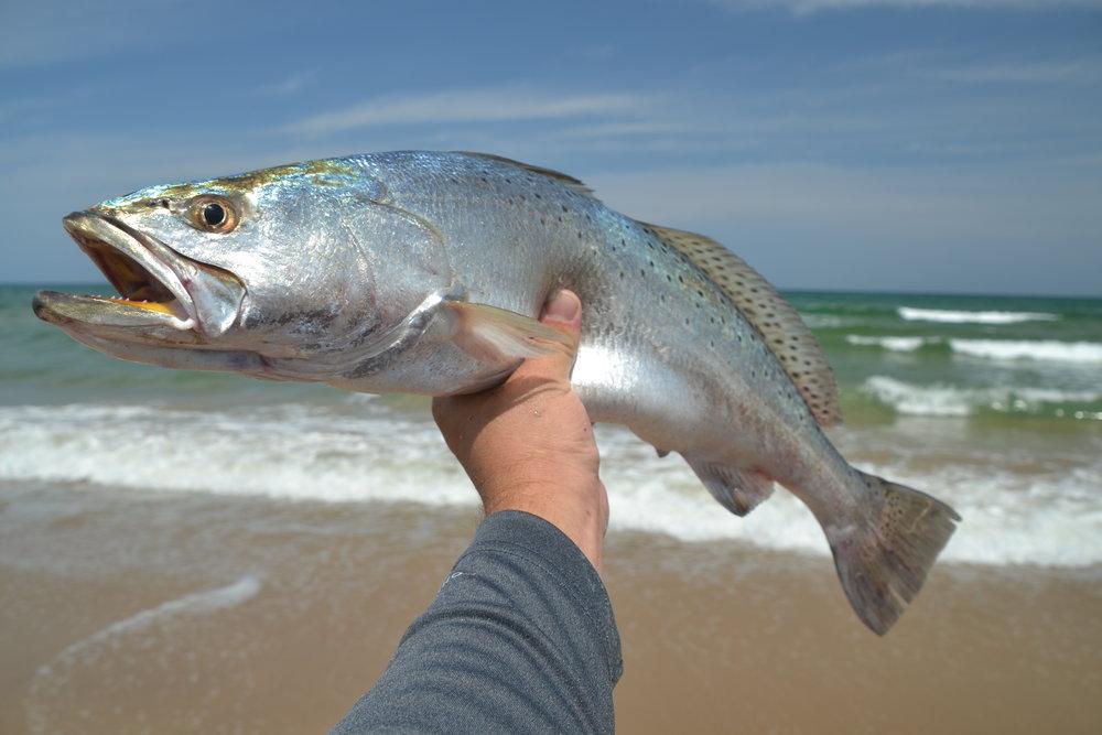 Surf trout!