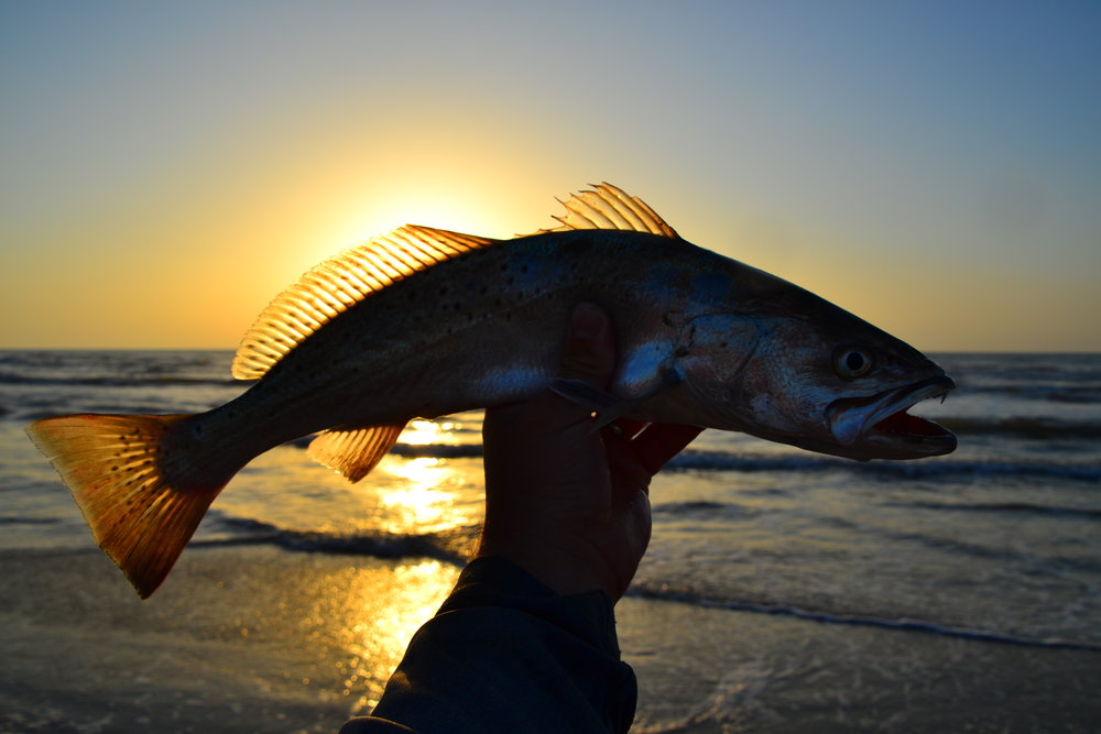 Scouting trip, speckled sea trout - Padre Island National Seashore