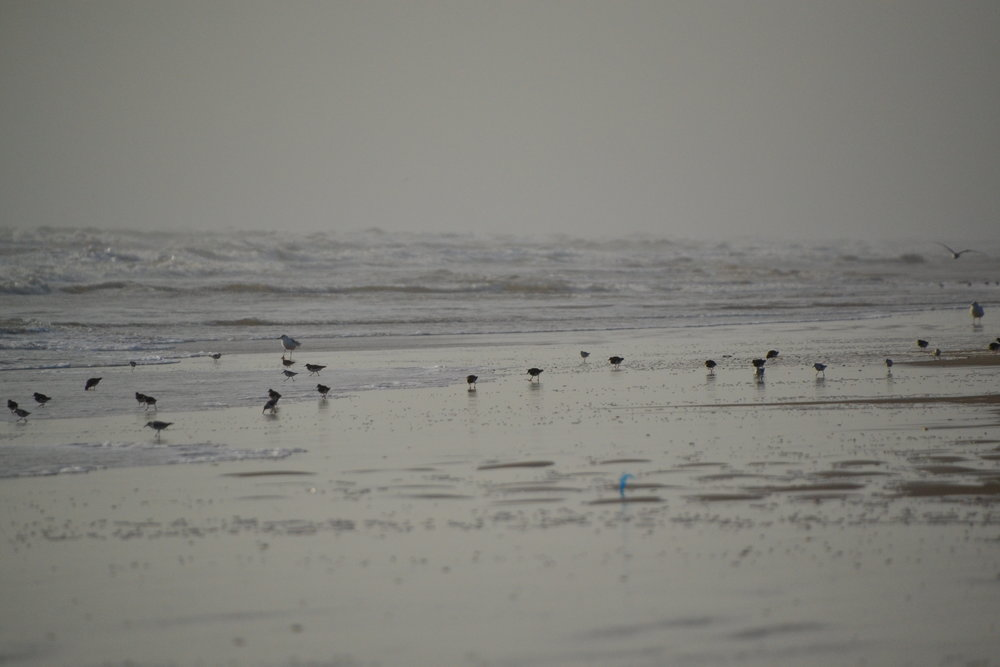 Winter's morning, shorebirds.