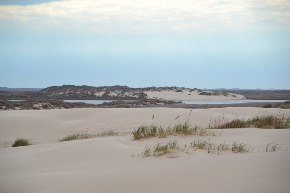 Hiking charter to the active dune fields with PAIS Artist-in-Residence, Sue Wolfe - Padre Island National Seashore