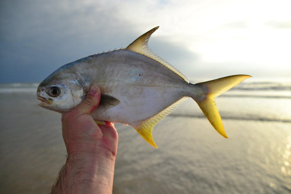 Redfish, Pompano, Whiting, Black Drum - Padre Island National Seashore