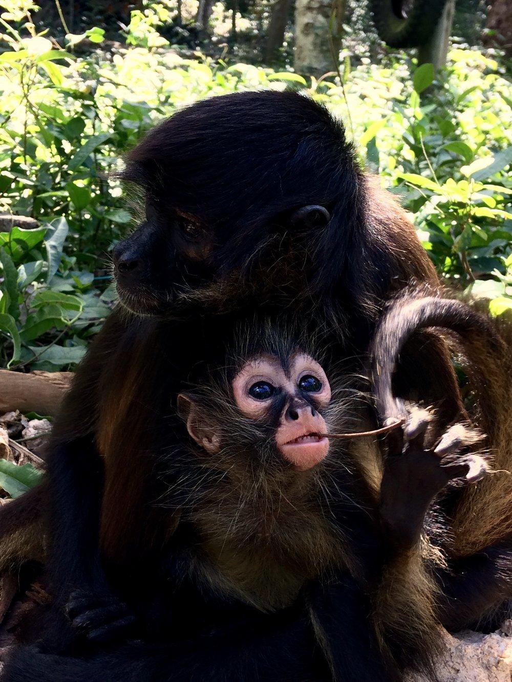 Monkey shelter - México Tropical® travel agency