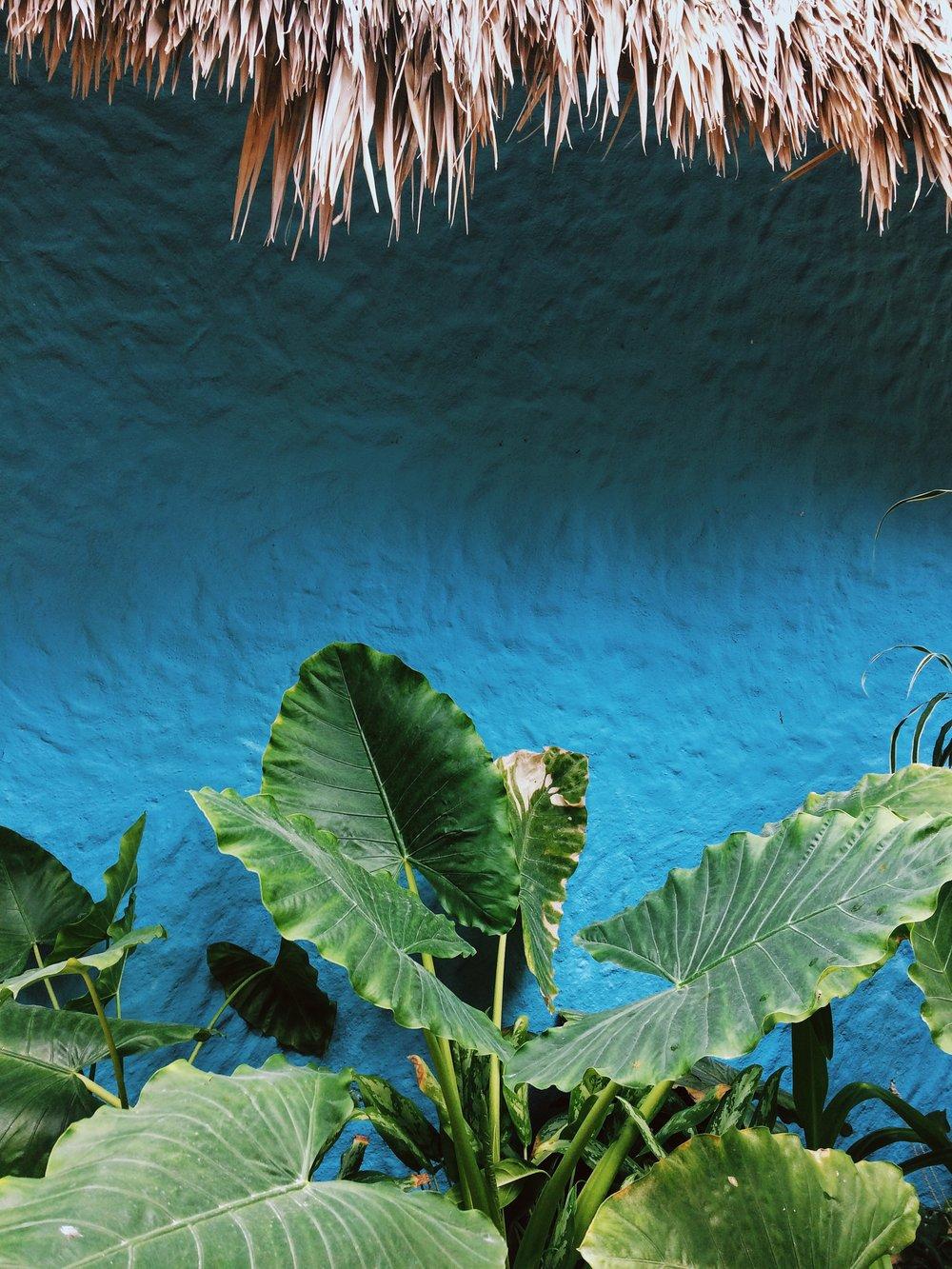 Casa Tortugas Holbox Island
