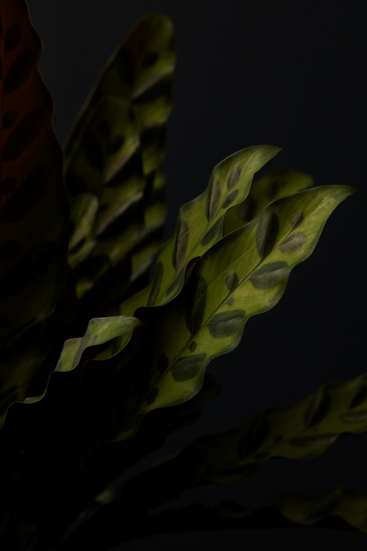 Texture_04_004.jpg