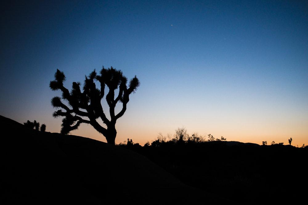 joshua-tree-silhouette.jpg