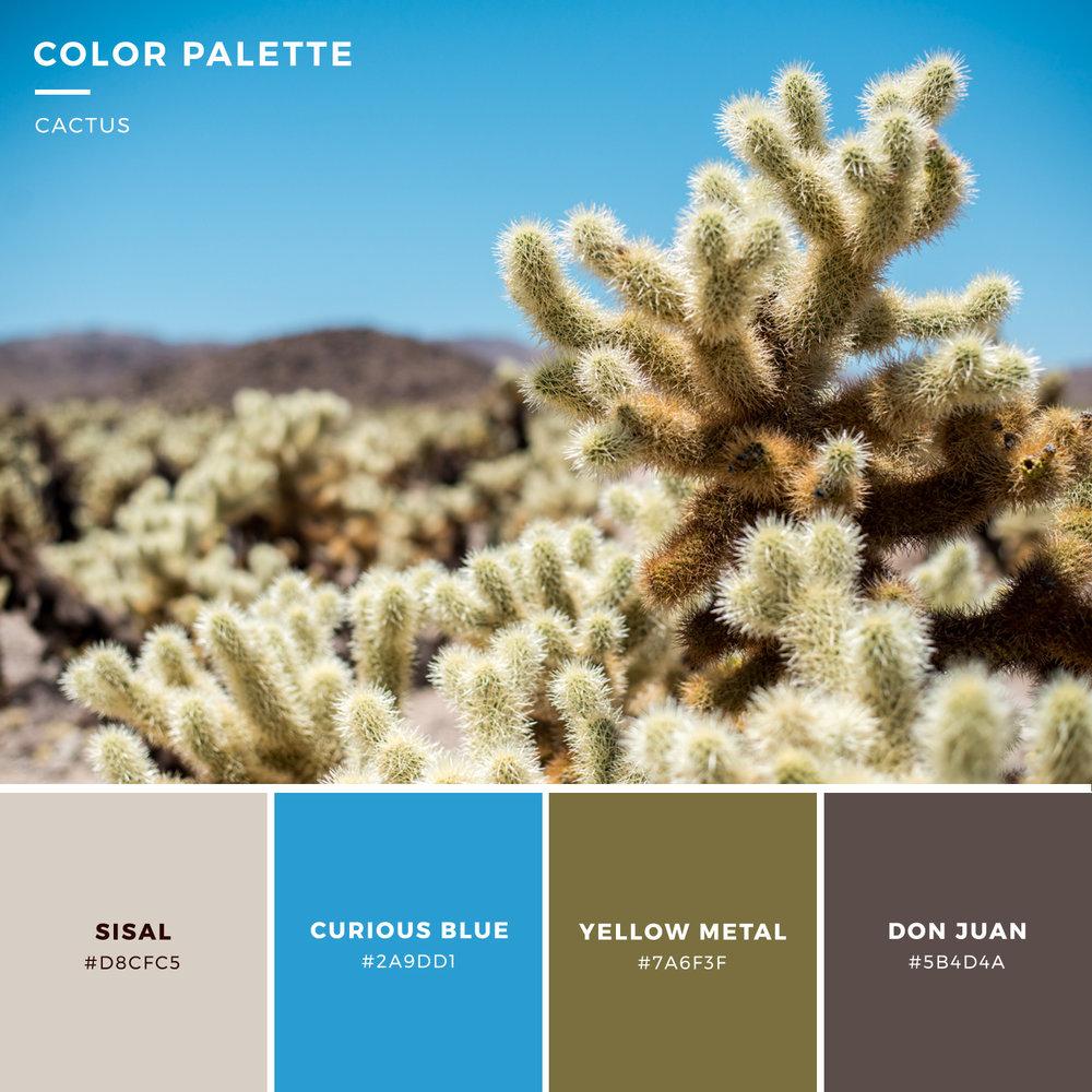 color-palette-cactus.jpg