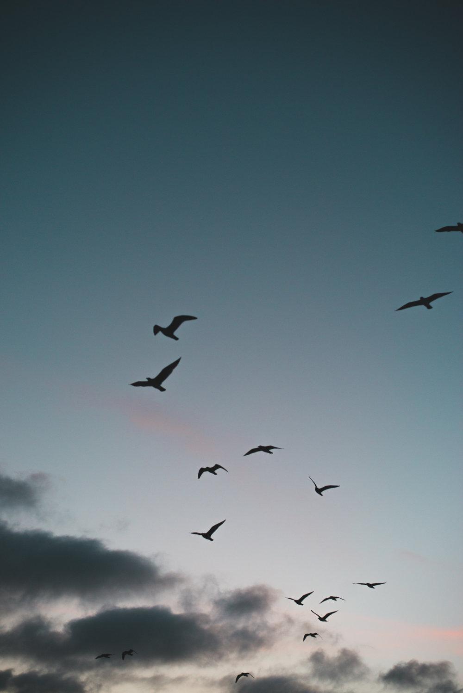 coronado-birds.jpg