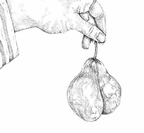 Pear Bottom by Else Simpson