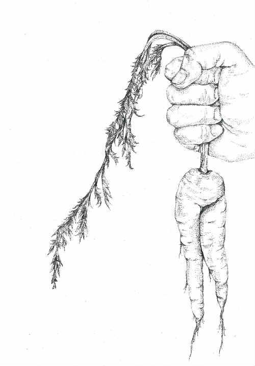 Carrot Legs by Else Simpson