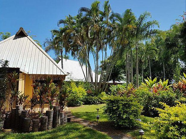 jungle yard.jpg